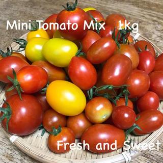 無農薬 有機栽培 ミニトマトミックス 1kg前後(野菜)