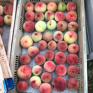 山梨県産 桃 はね出し 1キロ 500円〜 硬い桃(フルーツ)