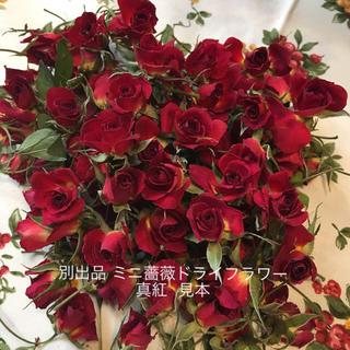 ミニ薔薇ドライフラワー★シリカゲル乾燥40輪セット★ミニバラ★おまけ付き★(ドライフラワー)