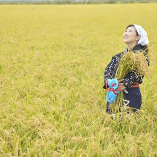秋田県大潟村 特別栽培米送料込み2800円(米/穀物)