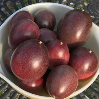 パッションフルーツ  送料込み  1kg(フルーツ)
