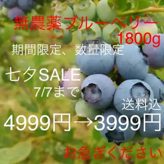 群馬県産 無農薬 ブルーベリー 1800g(フルーツ)