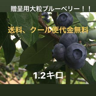 大粒ブルーベリー1.2キロ(フルーツ)