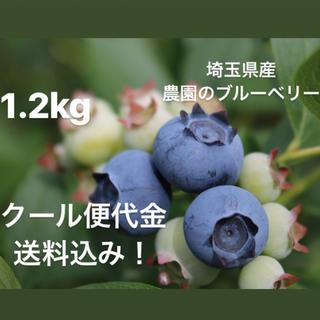 埼玉県産 新鮮ブルーベリー(フルーツ)