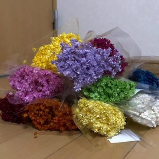 スターフラワー ミニ・マルセラ 100本花材ドライフラワー (ドライフラワー)