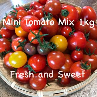 朝摘み 無農薬 有機栽培 ミニトマトミックス 1kg(野菜)