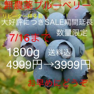 群馬県産 無農薬 生ブルーベリー 1800g(フルーツ)