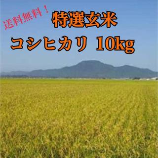 特選玄米コシヒカリ 10㌔