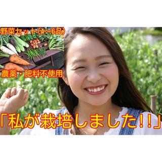 農薬・肥料不使用 野菜セットS4〜6品(野菜)
