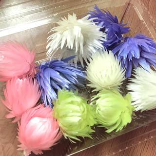 4色☆シルバーデイジーミニ(ドライフラワー)