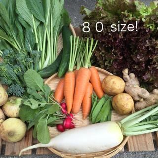 山口県産★新鮮野菜★詰め合わせ★80サイズ★即ご購入ok!