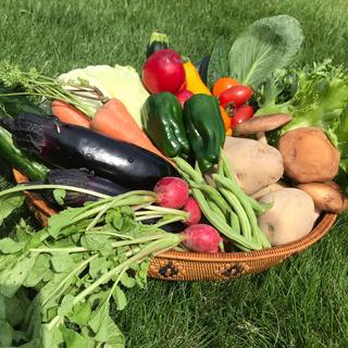 採れたて新鮮野菜♡ 80 和歌山産
