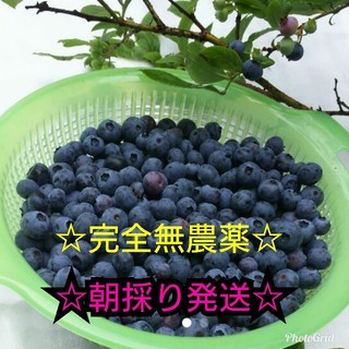 ☆ブルーベリー☆【大特価】2㌔(フルーツ)
