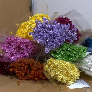 スターフラワー ・マルセラ 100本 花材 ドライフラワー (ドライフラワー)