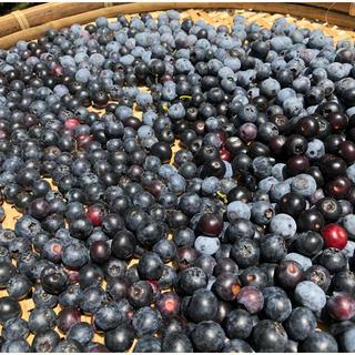 今年の完熟ブルーベリー冷凍 2キロ(フルーツ)