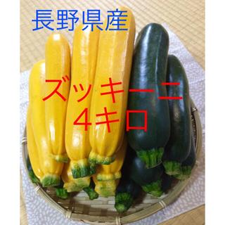 ☆値下げ!ズッキーニ☆60サイズ☆