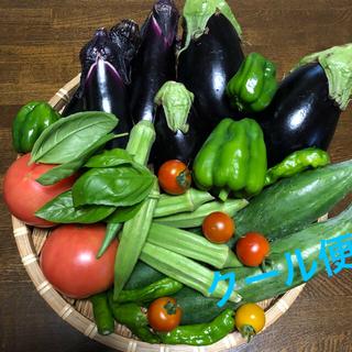 野菜セット 9種類 クール便 料金込み