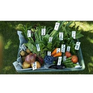 採れたて♪土からこだわったお野菜60サイズ(ブルーベリー入り)(野菜)