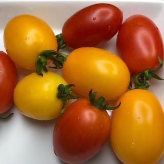 福岡県産 アイコトマト1キロ