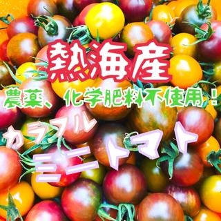 解禁【熱海産♨無農薬】カラフルミニトマト 約1㎏(野菜)