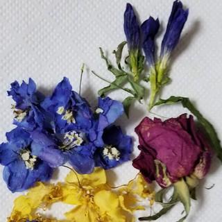 ドライフラワー花材(ドライフラワー)