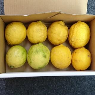 mu*様専用  広島県産 無農薬レモン 7キロ(フルーツ)