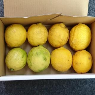 桂べす様専用  送料 広島県産 無農薬レモン 1キロ(フルーツ)