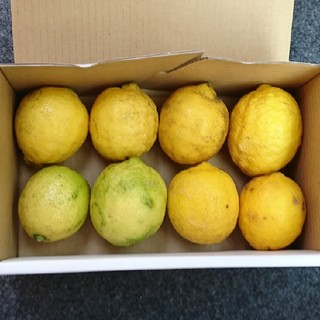 ゆずこ様専用 広島県産 無農薬レモン 3キロ(フルーツ)