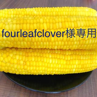 朝採れ トウモロコシ(野菜)