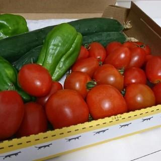トマト 野菜詰め合わせ