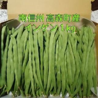 南信州の高原野菜 朝どりインゲン1kg(野菜)