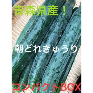 青森県産!きゅうり  1キロ(野菜)