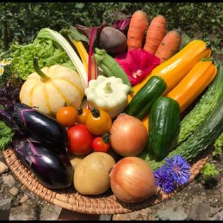 京都京北産 無農薬野菜セット 安心安全 オーガニック60サイズ(野菜)