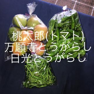 万願寺とうがらし 含む夏野菜セット(野菜)