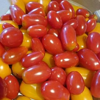 フルーツトマト  新潟産  1kg(野菜)