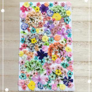 【押し花 素材】カラフルな小花セット158(各種パーツ)