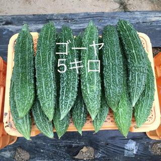 鹿児島産ゴーヤ5キロ^_^(野菜)