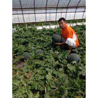 農家直売最高級品スイカ「ブラックジャック」約7~10キロの大玉!(フルーツ)