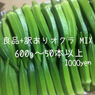 沖縄県産 産地直送 採りたて新鮮 訳ありオクラ 600g〜(野菜)