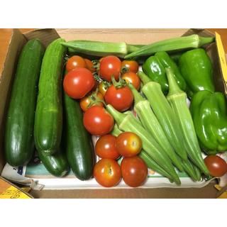 次回収穫予定 野菜詰め合わせ 自家栽培