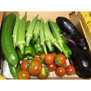 次回収穫予定 野菜詰め合わせ 自家栽培(野菜)