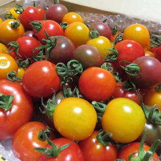 カラフルミニトマト1kg!(オマケ付き)