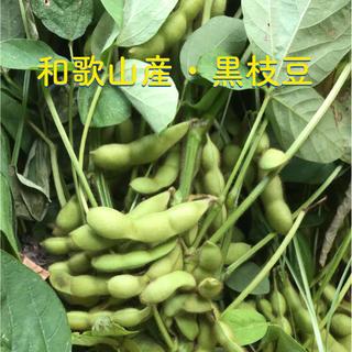 和歌山産☆黒枝豆(野菜)