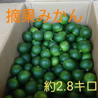 摘果みかん 5キロ(フルーツ)