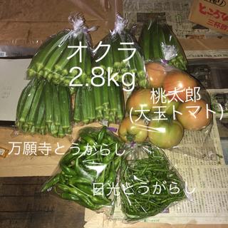 オクラ &夏野菜セット(野菜)