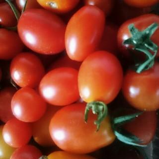 無農薬ミニトマト1キロ
