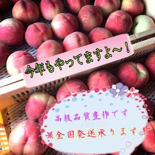 山梨県産 桃 なつっこ(フルーツ)