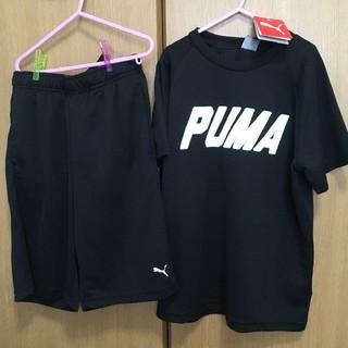 PUMA - PUMA 上下セット 150