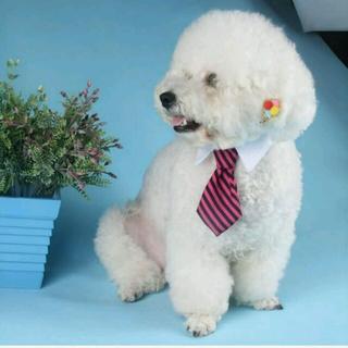 ネクタイ 首輪 ストライプ(犬)