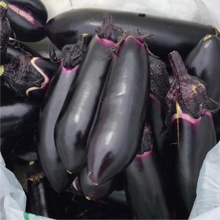 無農薬野菜不揃い茄子30個
